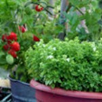container gardening vegetables